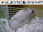 '05 blog 2212.JPG