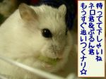 '05 blog 2217.JPG