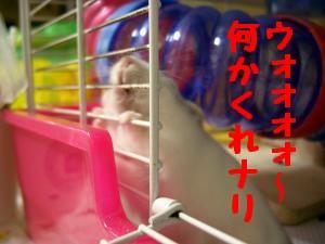 '06 blog 1109.JPG
