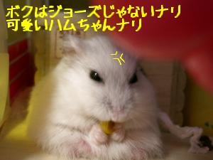 '06 blog 1403.JPG