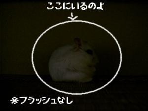 '06 blog 1455.JPG