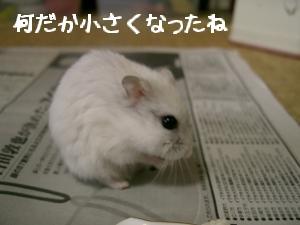 '06 blog 1456.JPG
