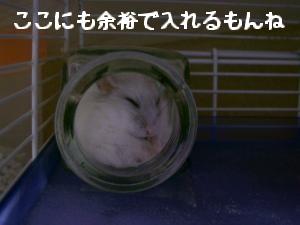 '06 blog 1457.JPG