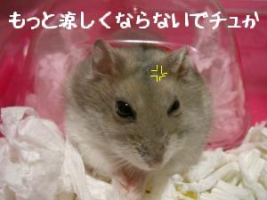 '06 blog 1506.JPG