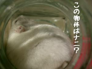 '06 blog 1521.JPG