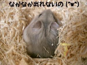 '06 blog 1708.JPG