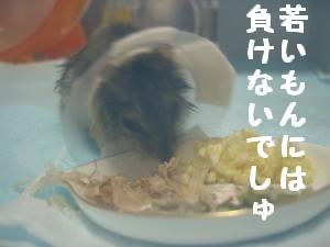 '06 blog 1167.JPG