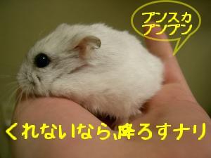 '06 blog 1294.JPG