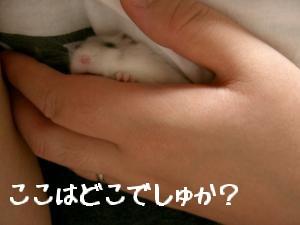 '06 blog 1332.JPG