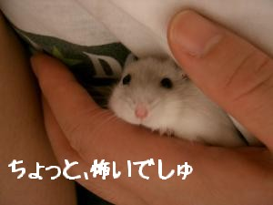 '06 blog 1333.JPG